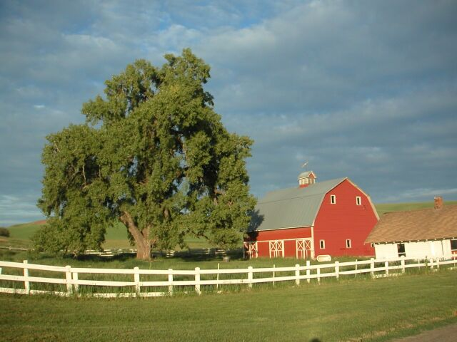 Thompsons Farm.jpg (61369 bytes)